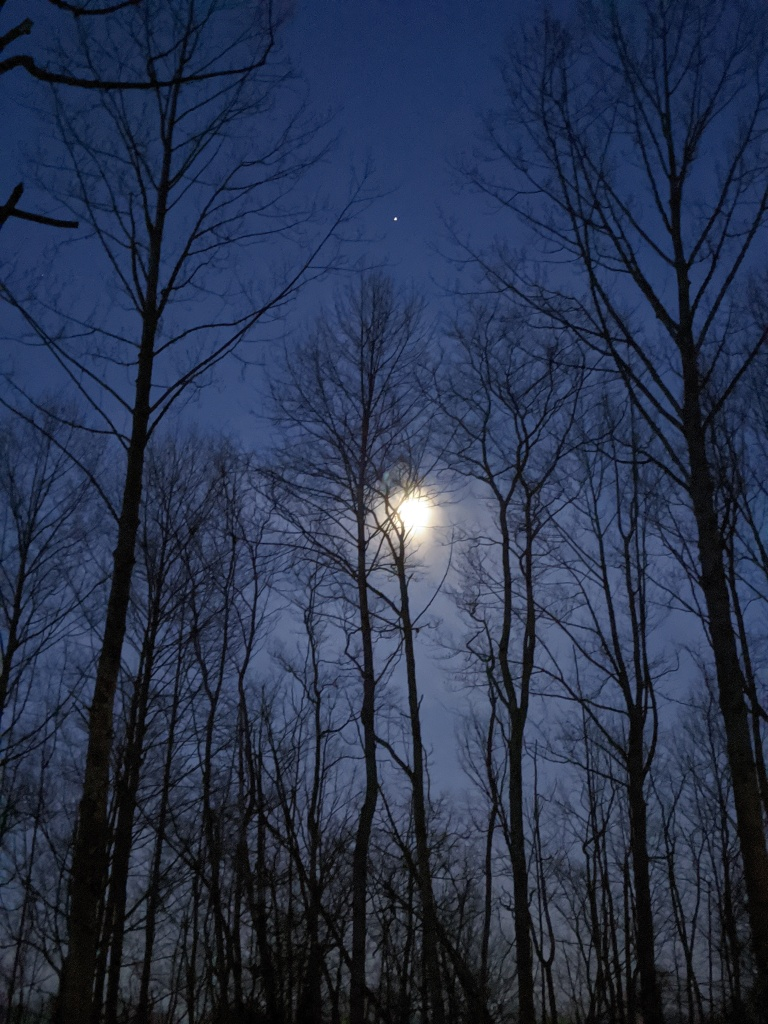A view of the sky in the early morning and bare trees. A tiny dot in the sky is the International Space Station flying above the moon covered in clouds.